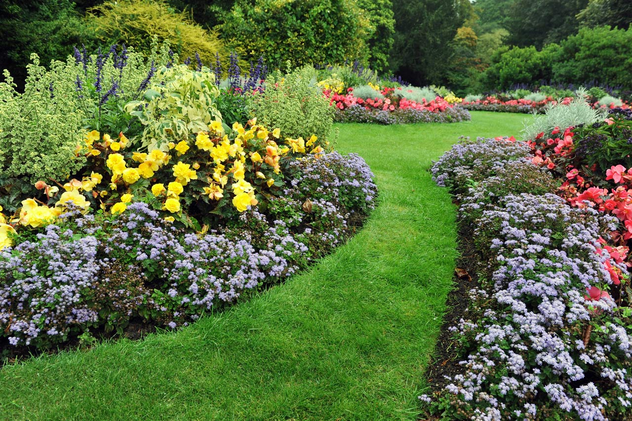 Year round plants for flower beds - Garden